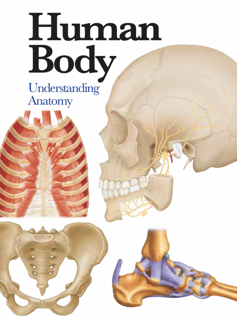 Human Body: Mini Encyclopedia