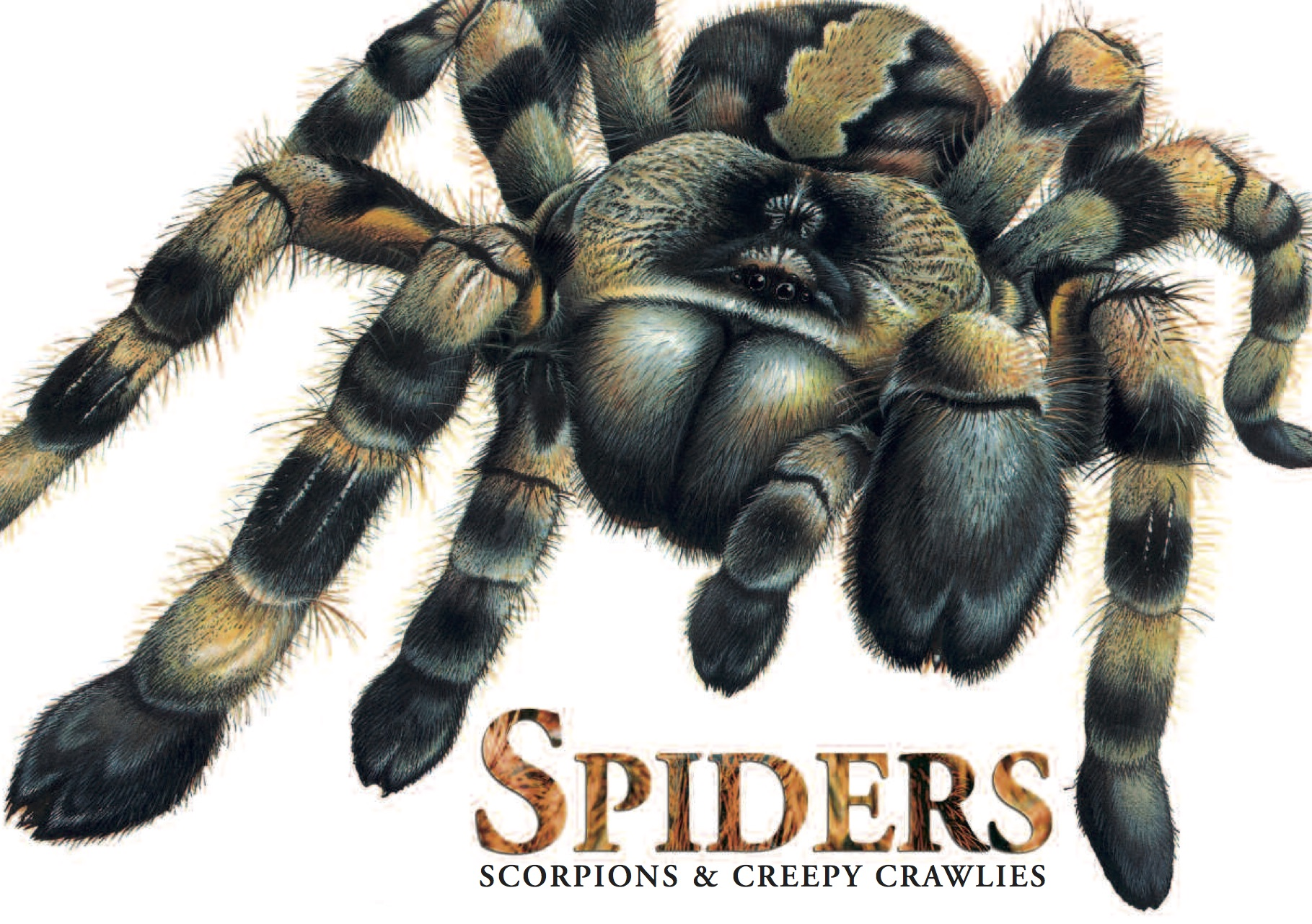 Spiders, Scorpions & Creepy Crawlies