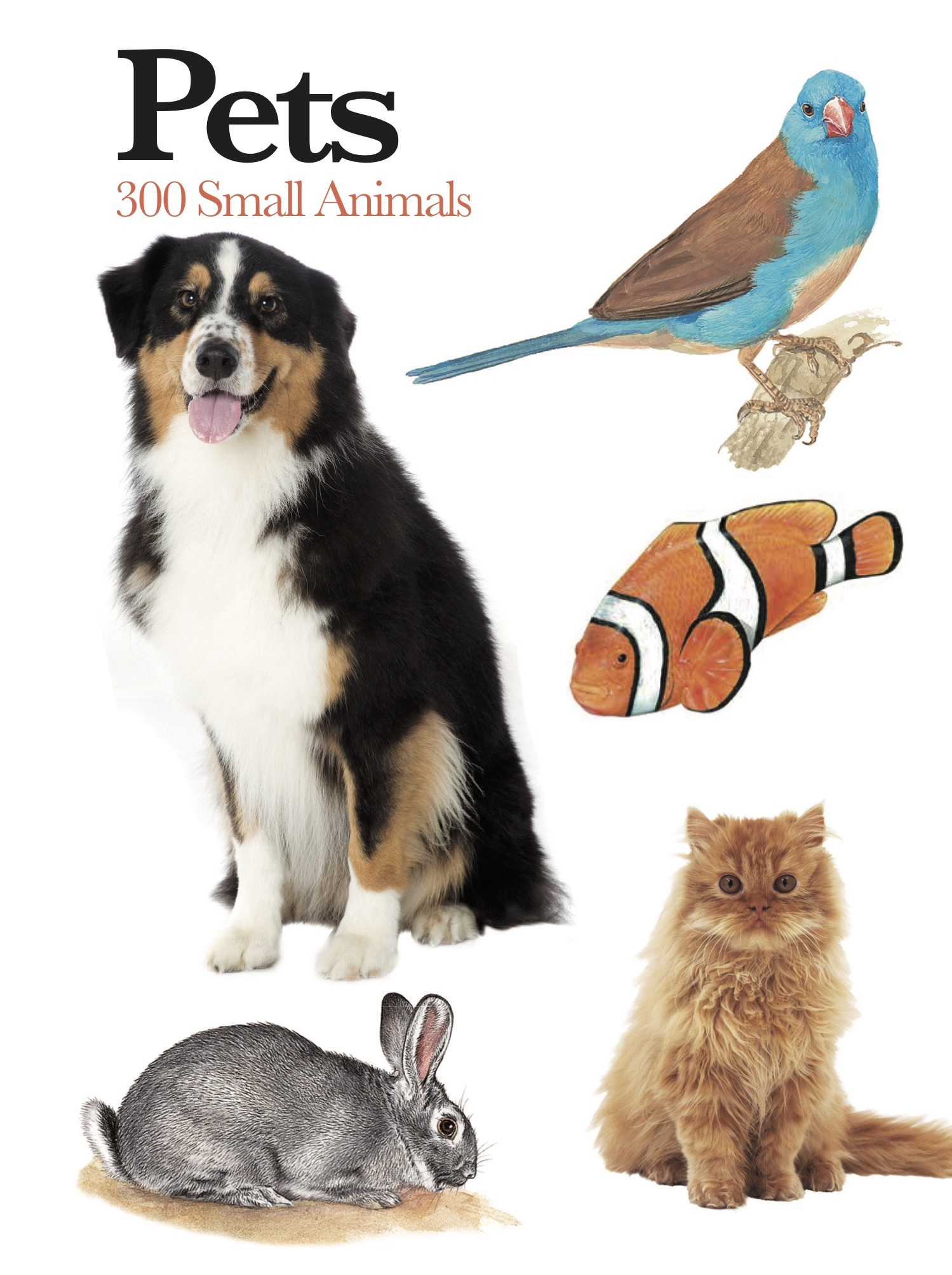 Pets: Mini Encyclopedia