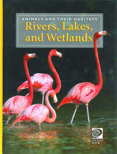 Discovering Animals: Rivers, Lakes, and Wetlands