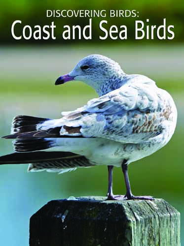 Discovering Birds: Coast and Sea Birds