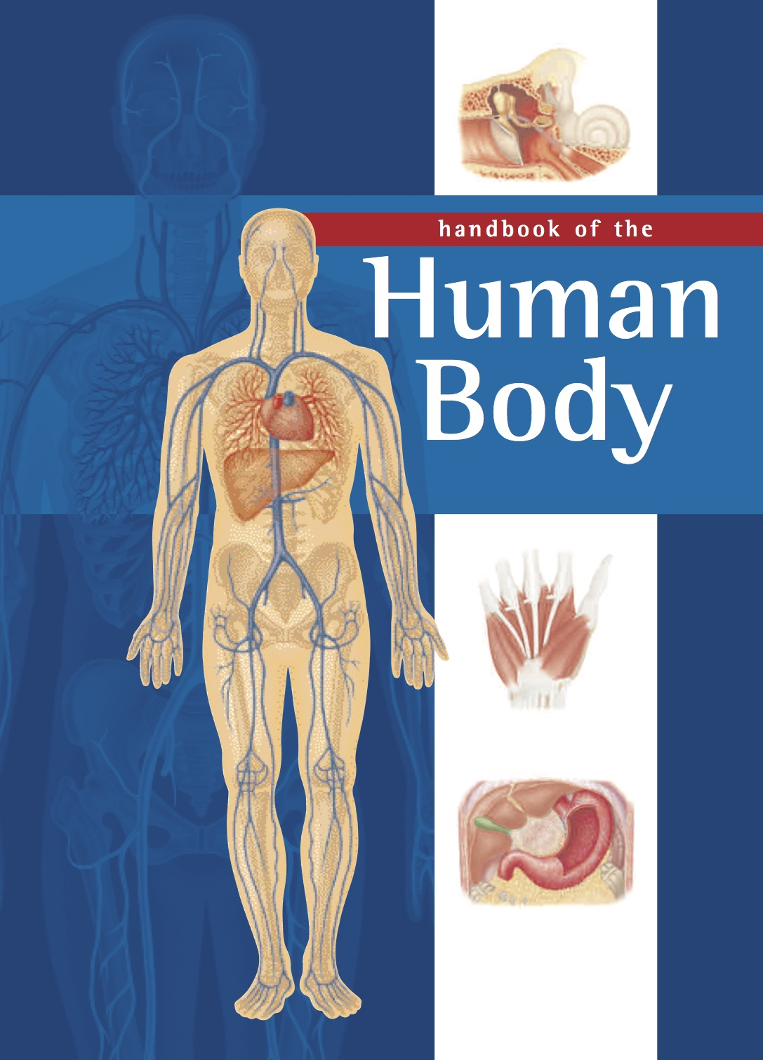 Handbook of the Human Body