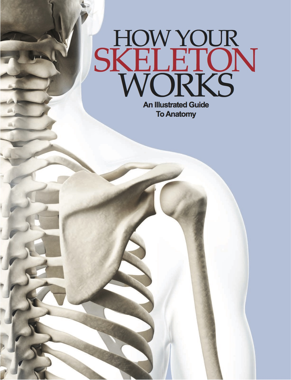How Your Skeleton Works