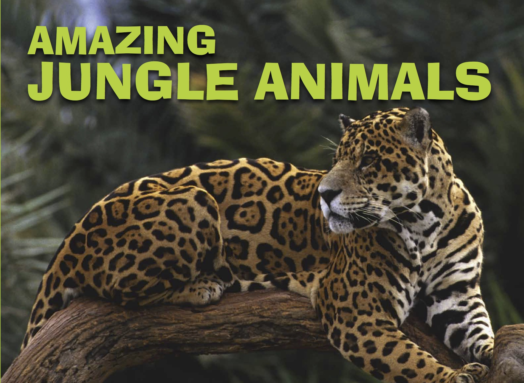 Amazing Animals: Jungle Animals
