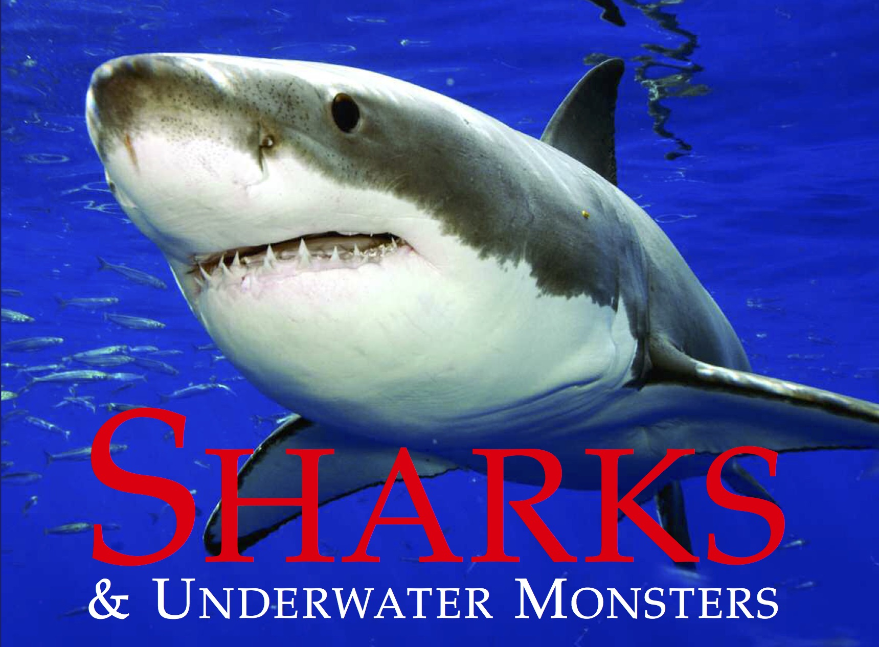 Sharks & Underwater Monsters