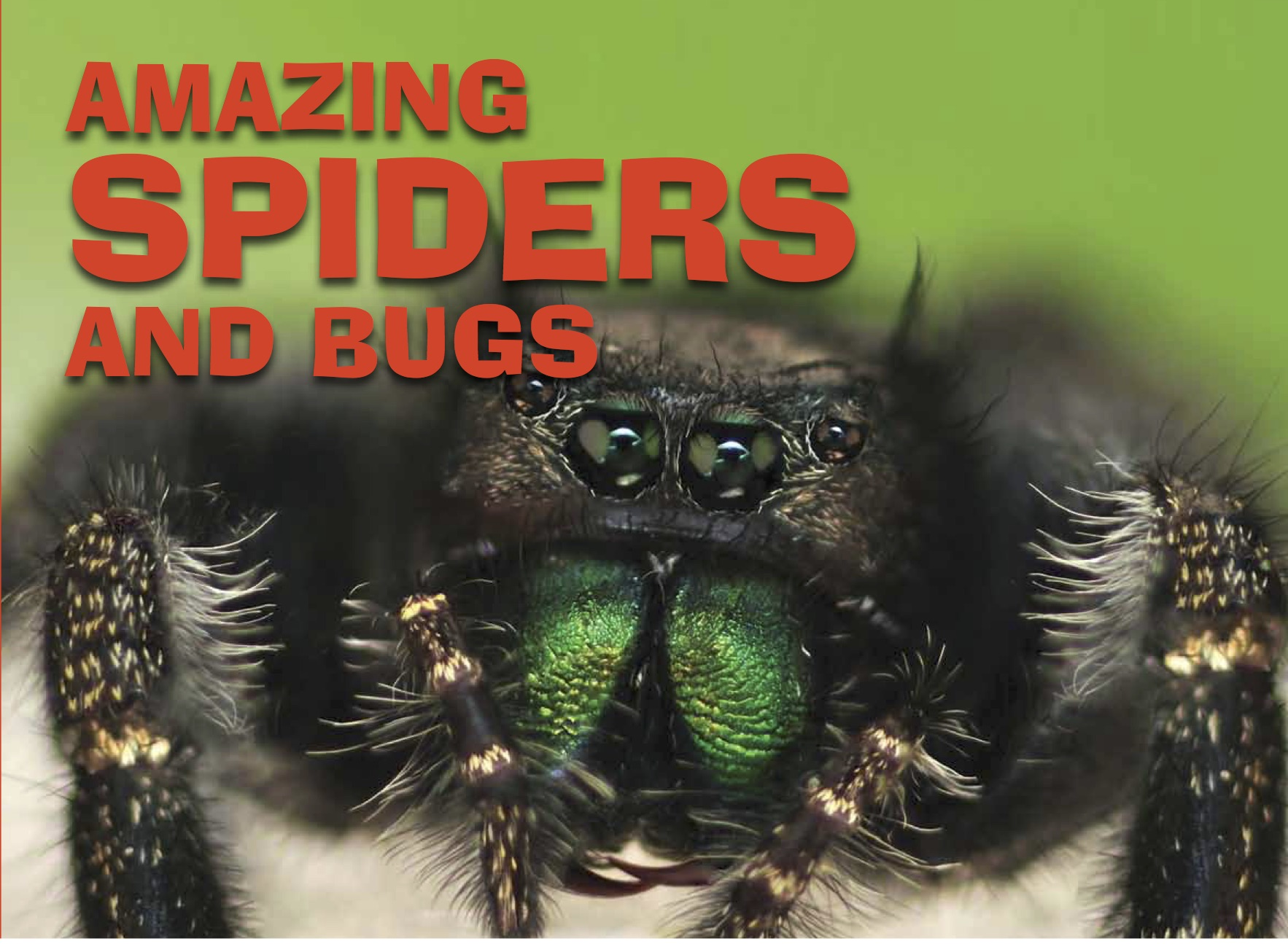Amazing Animals: Spiders and Bugs