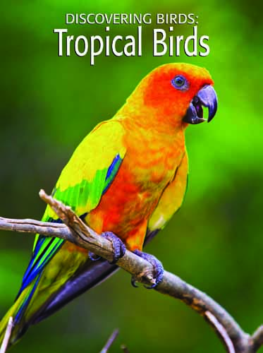 Discovering Birds: Tropical Birds