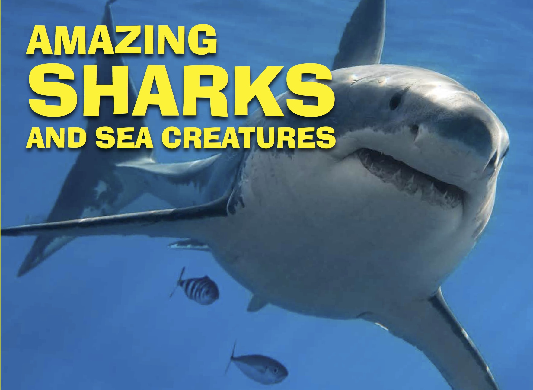 Amazing Animals: Sharks and Sea Monsters