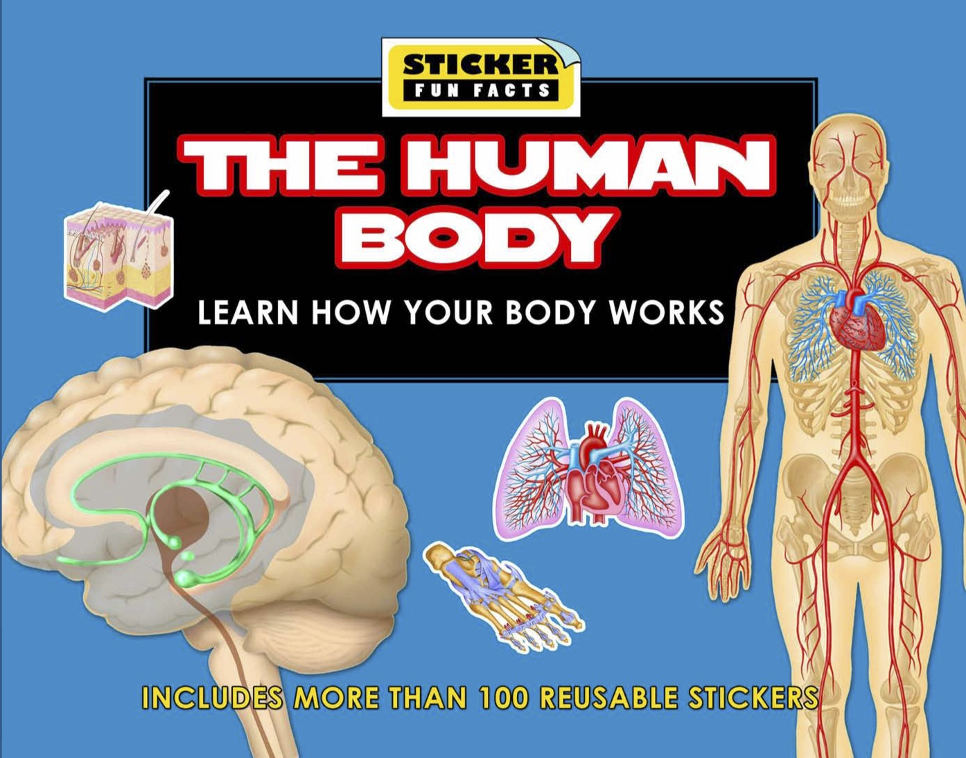 Sticker Fun Facts: The Human Body