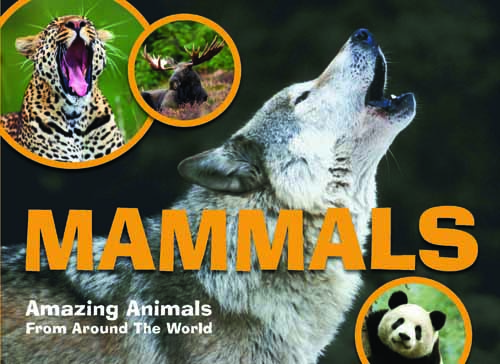 Amazing Animals: Mammals